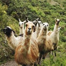 Fauna caratteristica del Cammino Inca