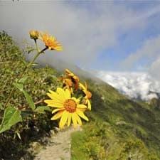 Megadiversità sul Cammino Inca